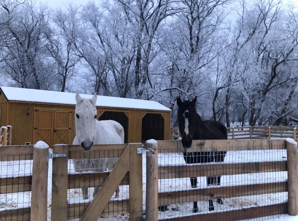 Animal Shelter Tack Room Combinations